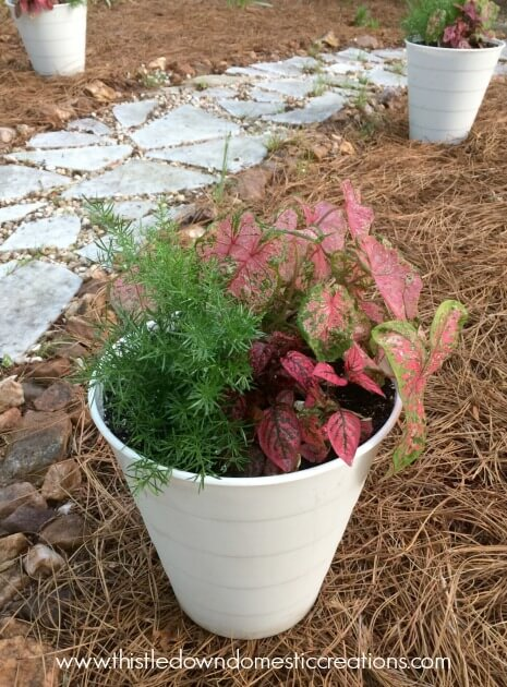 Newly potted plants near the garden path.