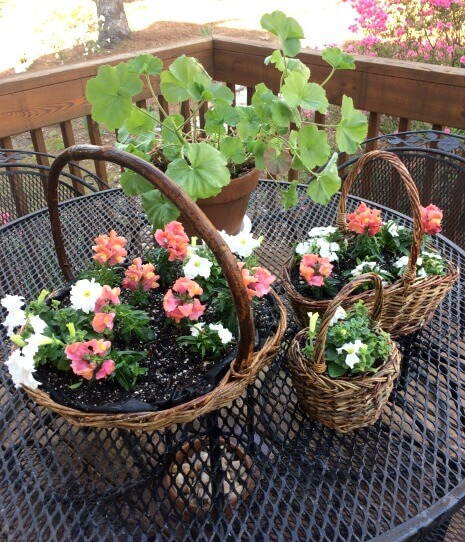Flowers are all planted in the baskets.