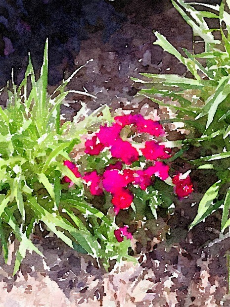 These pretty red flowers are so cheerful.