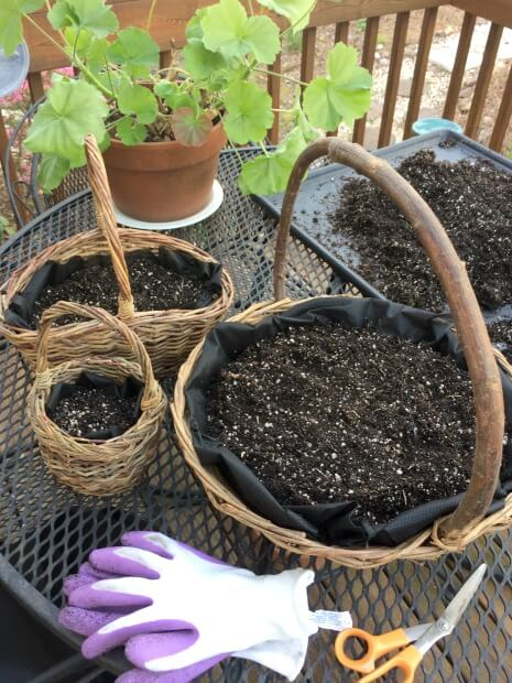 Potting soil has been added to the baskets